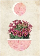 Gallery print  sunshine cactus - Mandy Reinmuth
