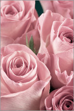 Gallery print  Bunch of pale pink roses