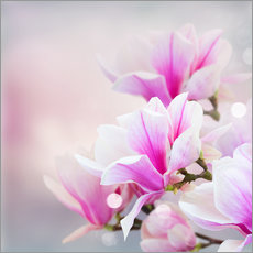 Wall Stickers  Magnolia flowers on bokeh background
