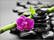 Wall Stickers  Basalt stones, bamboo and orchid