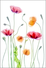 Wall sticker Poppy dance