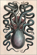 Gallery print  Common squid - Octopus