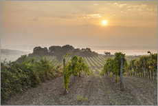 Wall sticker  Vineyards in the morning light, Lower Austria - Gerhard Wild