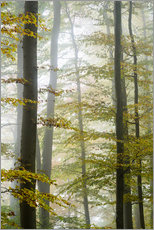 Wall sticker  Foggy forest in autumn foliage - Peter Wey