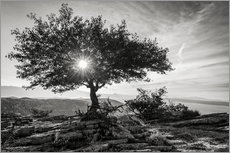 Gallery print  sun tree - Thomas Klinder