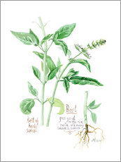 Wall sticker  Herbs & Spices collection: Basil - Verbrugge Watercolor