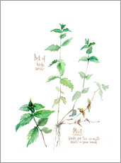 Wall sticker  Herbs & Spices collection: Mint - Verbrugge Watercolor