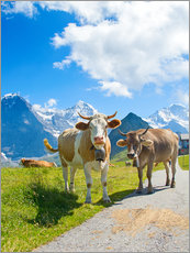 Gallery print  Cows on the Mountain Pasture