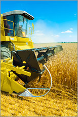 Gallery print  Combine harvester at work