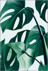 Gallery print  Monstera - Uma 83 Oranges