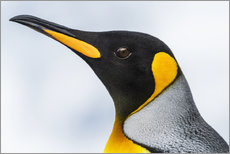 Gallery Print  King Penguin - Nick Dale