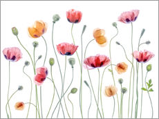 Wall Stickers  Papaver Party - Mandy Disher