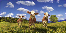 Wall sticker  Cows on the pasture - Michael Rucker