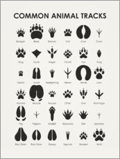 Canvas print  Common animal tracks - Iris Luckhaus