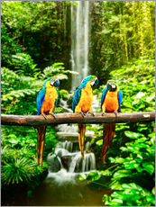 Gallery print  Three macaws in front of a waterfall
