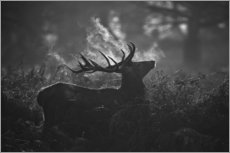Gallery print  A large male deer stag bellows out in a cold winter landscape of Richmond park, London. - Alex Saberi