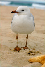 Gallery print  Seagull in the sand