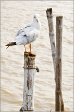 Gallery print  Seagull on pole