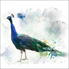 Wall sticker  Peacock of the page
