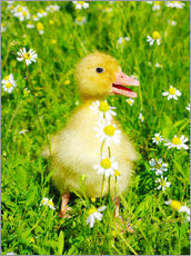 Wall sticker  Duckling on flowery meadow