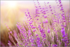 Wall Stickers  blooming lavender