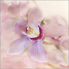 Wall sticker  orchids - Heidi Bollich