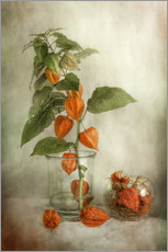Gallery print  Still life with Physalis - Mandy Disher