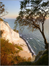 Gallery print  Chalk cliffs of Møns Klint - Andreas Vitting