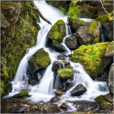 Gallery print  Waterfall in the forest near Triberg, Black Forest - Jan Christopher Becke