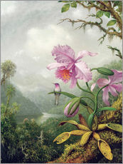 Wall sticker  Hummingbird perched on an Orchid Plant - Martin Johnson Heade