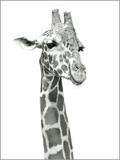 Gallery print  Sketch Of A Smiling Giraffe - Ashley Verkamp