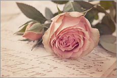 Gallery print  Rose on the old letter - Elena Schweitzer