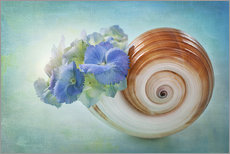 Gallery print  Blue flowers in a snail shell - Elena Schweitzer