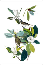 Canvas print  Two birds with magnolia - John James Audubon