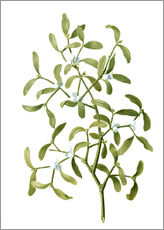 Wall sticker Mistletoe