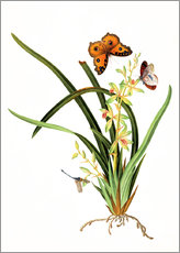 Gallery print  Butterflies and a dragonfly on a plant