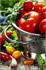Gallery print  Tomatoes in the sieve
