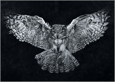 Gallery print  Owl 1 - Christian Klute
