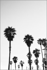 Gallery print  Boulevard under the palm trees - Finlay and Noa