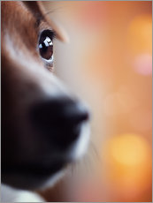 Gallery print  PERSPECTIVE - Jack Russel eye - Janina Bürger