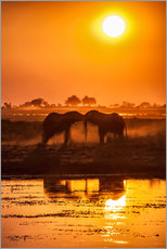 Wall sticker  Elephants at sunset, Chobe Park,Botswana, Africa - Roberto Sysa Moiola