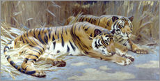 Gallery print  Two tigers resting in shade - John Charles Dollman