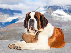 Gallery print  Saint Bernard rescue dog