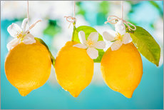 Wall sticker  Lemons - K&L Food Style