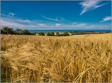 Gallery print  Landscape with corn field and Baltic Sea - Rico Ködder