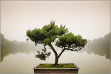 Wall sticker  Japanese bonsai in zen garden