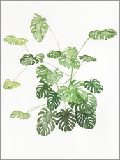 Gallery Print  Monstera - Jennifer McLennan
