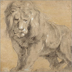 Gallery print  Study of a lion - Peter Paul Rubens