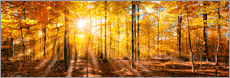 Wall Stickers  Autumnal forest panorama in sunlight - Jan Christopher Becke