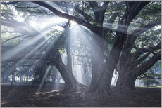 Wall sticker  Light rays at sunrise in a forest - Alex Saberi